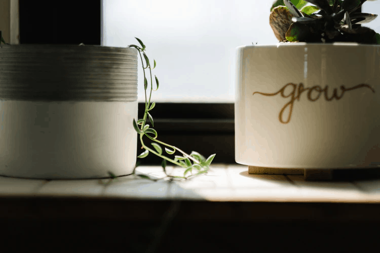 Caring for the Best Indoor Plants