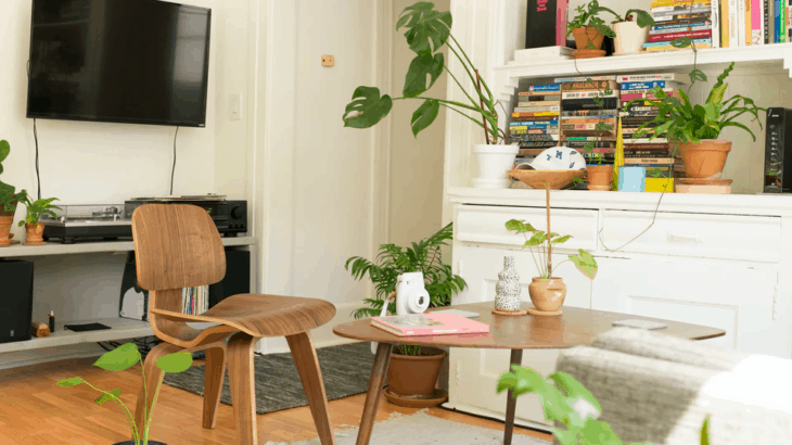 The Best Plants for Indoors
