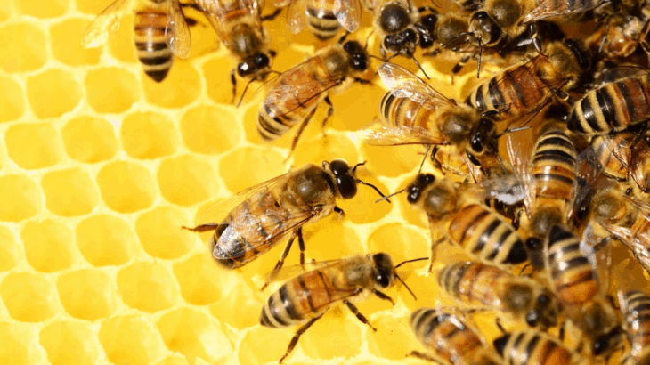 The Most Common Types of Bees